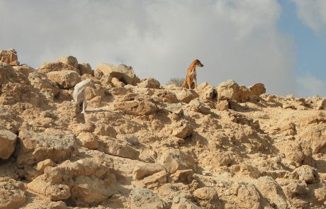 לבד במדבר- פרויקט חוות הבודדים